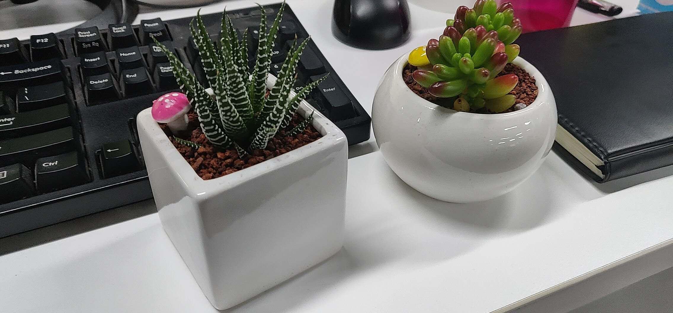 2020.04.11 - 植物